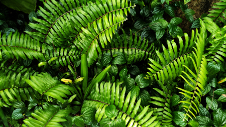 Vertical garden with tropical green leaf, contrast Foto de archivo - 119617489