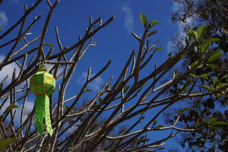 Paper lantern and Plumeria branch with blue sky background.