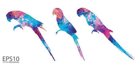 Colorful Macaw bird  pattern background.