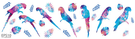 Colorful Macaw bird and tropical leaf pattern background.