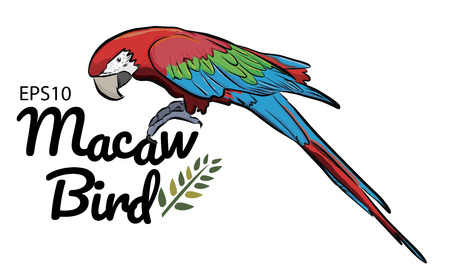 Colorful drawing Macaw bird  pattern background.