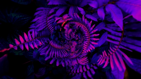 Tropical leaf forest glow in the black light background. High contrast. Foto de archivo - 119058879