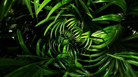 Vertical garden with tropical green leaf, contrast Foto de archivo - 119058881