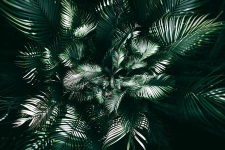 Vertical garden with tropical green leaf, Dark tone Foto de archivo - 119058892