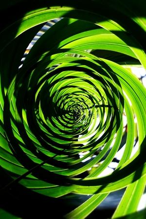 Vertical garden with tropical green leaf, contrast Foto de archivo - 119058925