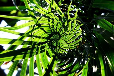 Vertical garden with tropical green leaf, contrast Foto de archivo - 119058948