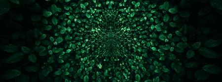 Tropical green leaf background, Dark tone theme. Foto de archivo - 122372347