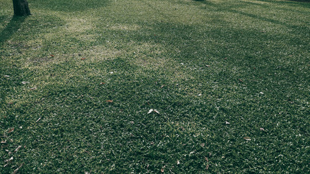 Green grass texture background in the park. Dark tone. Foto de archivo - 122372348