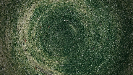 Green grass texture background in the park. Dark tone. Foto de archivo - 122372349