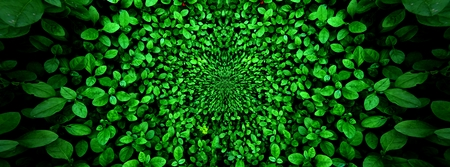 vertical garden with tropical green leaf, contrast Foto de archivo - 122372351