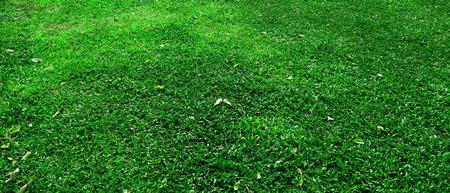 Green grass texture background in the park. Foto de archivo - 122372353