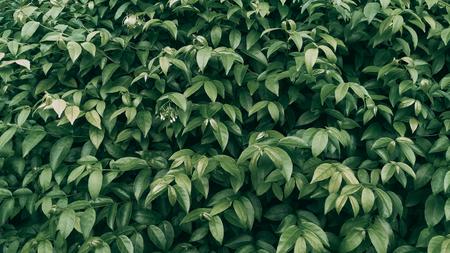Tropical green leaf background, Dark tone theme.