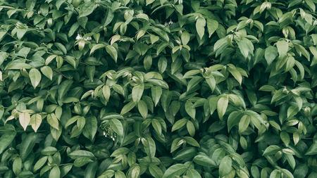 Tropical green leaf background, Dark tone theme. Foto de archivo - 122374882