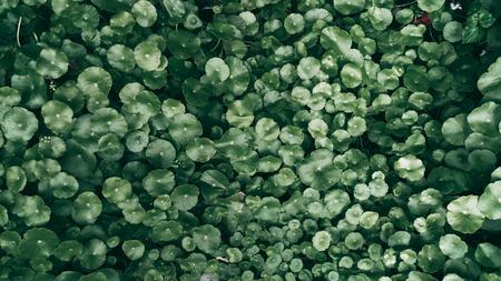 Tropical green leaf background, Dark tone theme. Foto de archivo - 122374885