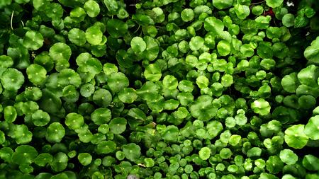 Vertical garden with tropical green leaf, contrast Foto de archivo - 122374898
