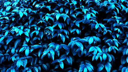 Blurred tropical leaf forest glow in the dark background. High contrast. Foto de archivo - 122374905