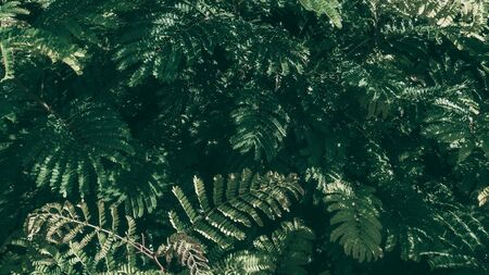 Tropical green leaf background, Dark tone theme. Zdjęcie Seryjne - 128015314