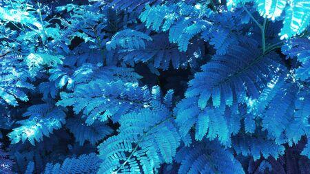 tropisches Blattwaldglühen im dunklen Hintergrund. Hoher Kontrast.
