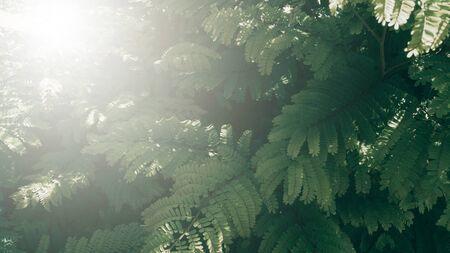 Vertical garden with tropical green leaf, Dark tone with sunrise. Zdjęcie Seryjne