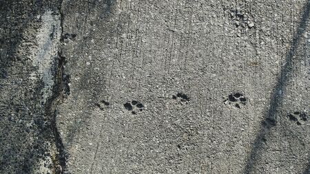 Dog footprints on gray cement floor background