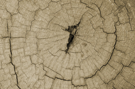 wood surface: surface of wood cuts