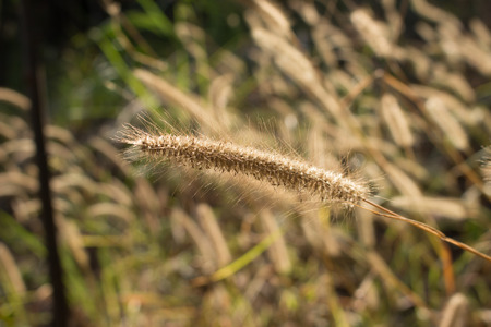 the backlighting: backlighting grass in winter Stock Photo