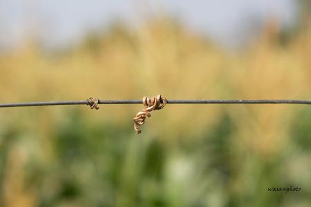 teambuilding: strand on nature background
