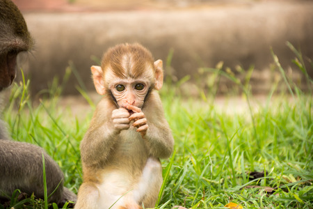 Baby Monkey in the park