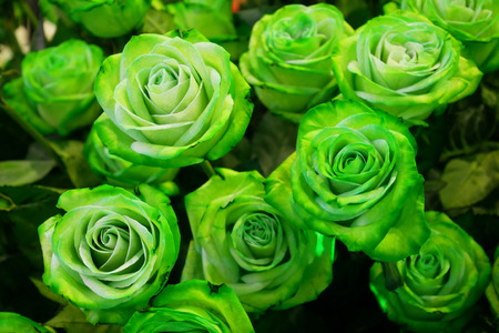 Green Roes Flower