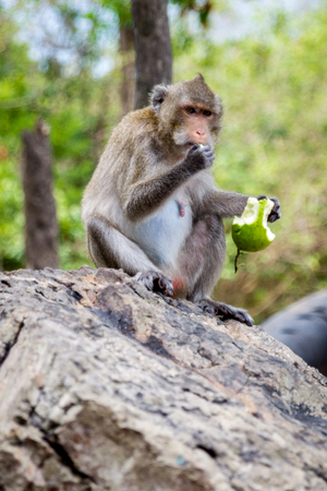 A lonely monkey has enjoy eating.