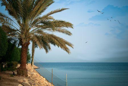 Una imagen de alta resolución de un hermoso paisaje de marino al-Khobar, Arabia Saudita.