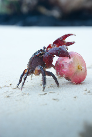 fale: Ghost Crab Stock Photo
