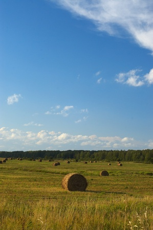 Haystack in the field. photo