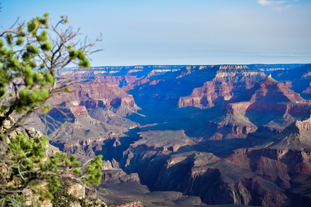 Sunrise morning at Grand Canyon National Park. Fog beautiful landscape. Pine tree foreground 免版税图像
