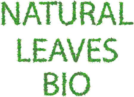 自然、葉、バイオ滴と緑の葉の碑文