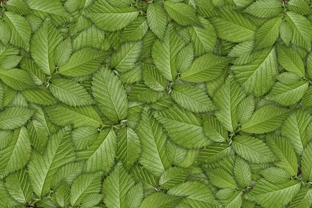Fondo de planta verde, crecimiento joven