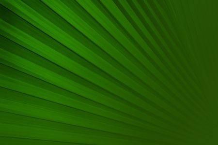 palm frond: foglia di palma sfondo Archivio Fotografico