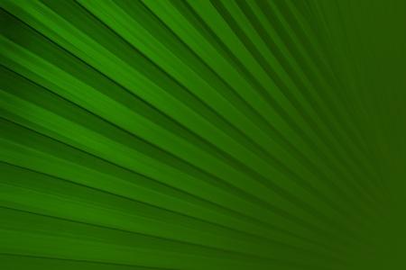 palmblad achtergrond