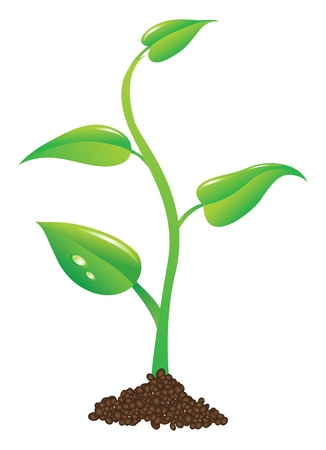 young plant illustration Stock Photo