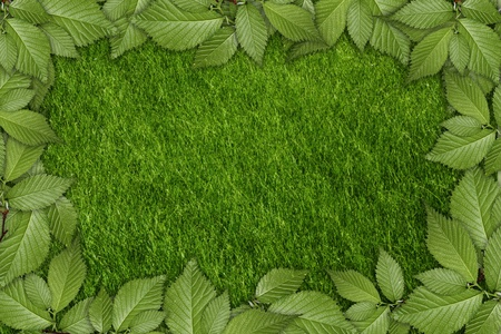 grass plot: green plant background