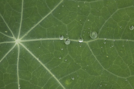 Green leaf with waterdrops photo