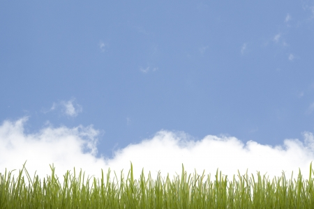green grass and blue sky Stock Photo - 14294191