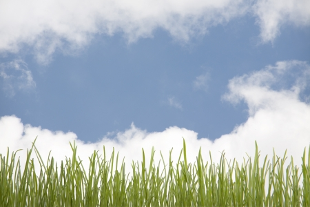 green grass and blue sky Stock Photo - 14382612