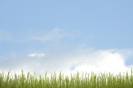 green grass and blue sky Stock Photo - 14508945