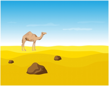 one humped: Camel in the Desert