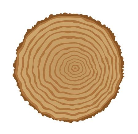 나무 그루터기의 단면