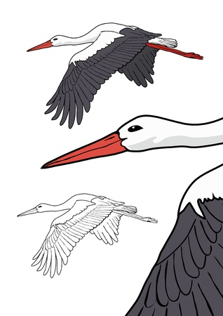Flying stork, vector illustration Vector