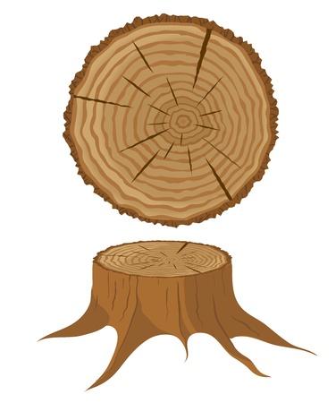 Sezione trasversale di albero e ceppo Vettoriali