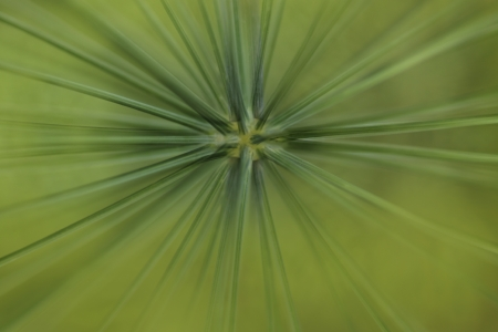 green burst photo