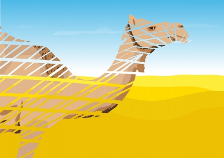 humped: Camel in the Desert